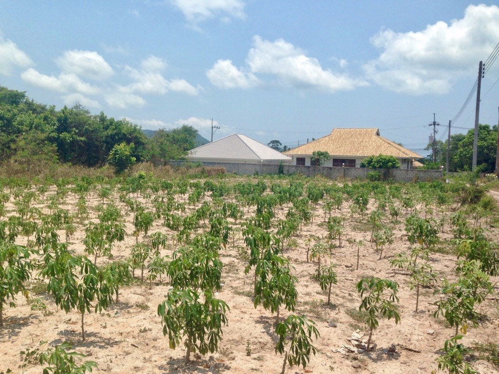 Land plot of 290tw in Bang Sare   - Land - Bang Saray -